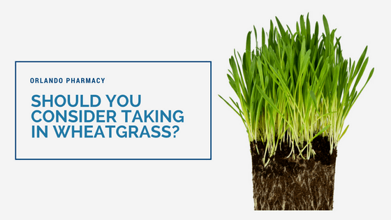 Should You Consider Taking in Wheatgrass?